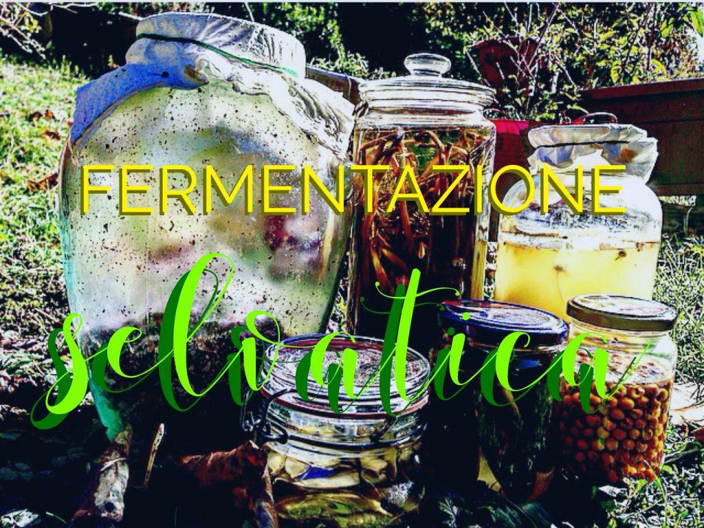 fermentazione selvatica Pikniq
