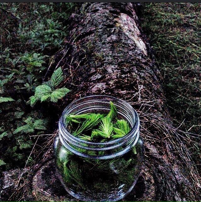 bosco in vetro